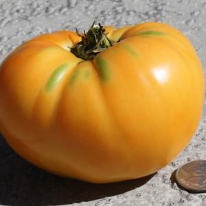 Yellow, and Orange Tomatoes