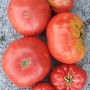 Pink Tomatoes