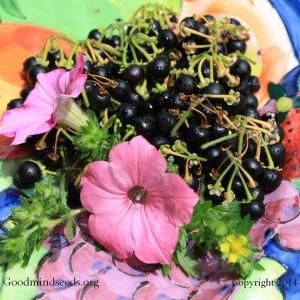 blackberrynightshade22