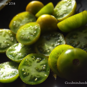 greengrassbluPL2